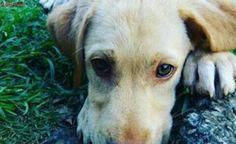 Venda de animais gera sequestro de cães no Alto Tietê, afirma advogada