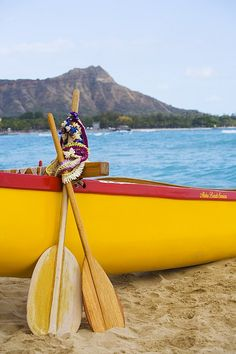 Outrigger & Paddles, Waikiki, Oahu. We went canoeing...dolphines swimming nearby:)