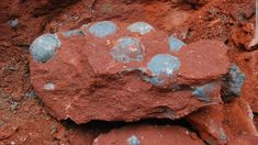 Egg-straordinary find: Workers point to the dinosaur eggs that were discovered as they were fitting a new sewage pipe in Heyuan, south-eas...