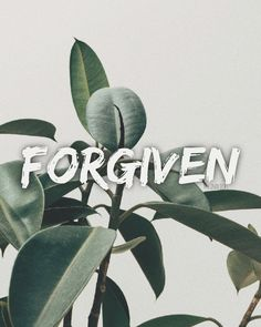 I am forgiven Forgiveness, Stress, Pictures, Psychological Stress, Letting Go