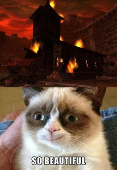 Something made angry cat smile?