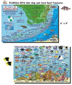 MailOrderHawaii.com: Florida Keys Fish Card