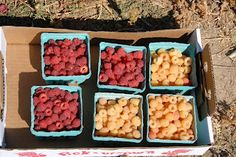 Berry Patch Farms: Pick-Your-Own and Country Harvest Festival (Brighton, CO) | Boulder Locavore