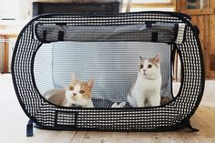 Best Free of Charge Tucker Murphy Pet Pickell Portable Outdoor Cat Cage with Door Style Nowadays, dogs are whole nearest and dearest, but this has not always been the case. Outdoor Cat Cage, Outdoor Cats, Cat Cages Indoor, Outdoor Ideas, Cat Playpen, Gatos Cool, Cat Crate, Cat Hotel, Cat Enclosure