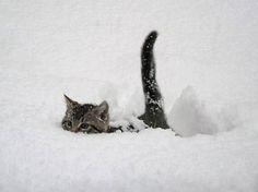 雪なんてへっちゃらな猫09