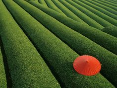 A perfect example of how a small amount of red creates a perfect complementary harmony with green