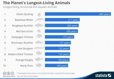 Amazing chart shows the planet's longest-living animals - ScienceAlert
