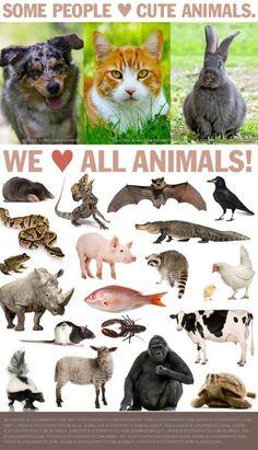 I <3 all animals
