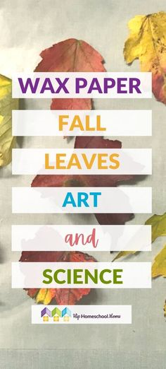 These two fun fall leaves art and science activities are perfect for this time of year! Grab a few fall leaves and give them a try! Fall Activities For Toddlers, Science Activities, Science Ideas, Stem Projects For Kids, Leaf Art, Fall Leaves, Business For Kids, Toddler Crafts, Homeschooling Resources