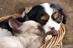 A alimentação do seu pet requer cuidado e atenção especiais nos primeiros dias de vida. Saiba tudo sobre o assunto!