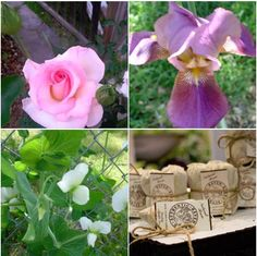 #Free S/H #HavenBrand premium soil conditioner tea. Safe for all #plants and #soil types. Place your order today at manuretea.com #gardening #gifts #bulbs #succulents #roses #seeds