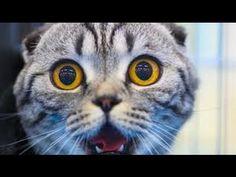cats scared of cucumbers compilation - cats vs cucumbers - funny cats 2017 -  #animals #animal #pet #cat #cats #cute #pets #animales #tagsforlikes #catlover #funnycats  Learn how to speak cat! Click HERE for the cat bible! Katten die dom zijn en schrikken van komkommers! Het is zowel grappig als dom. Vraag me niet wat katten met komkommers hebben!  - #Cats