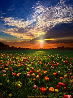 Flower Field at Sunset ~ Marvelous Nature Stunning Photography, Landscape Photography, Nature Photography, Amazing Grace, Amazing Nature, Beautiful World, Beautiful Places, Beautiful Beautiful, Belleza Natural