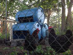 Barrel Chicken Coop (55 Gallon Barrels Make Simple, Economical  Coop) Short URL:  goo.gl/k5VVl1