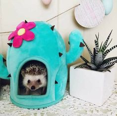 """Like my new Zen house? Baby Animals Pictures, Cute Animal Photos, Animals And Pets, Hedgehog Cage, Baby Hedgehog, Baby Animals Super Cute, Cute Little Animals, Animal Room, My Animal"