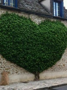 Having a garden at home is a dream for everyone, here one alternative you can do is to make an outdoor vertical garden design on the walls of the house. Dream Garden, Garden Art, Garden Design, Garden Ideas, Garden Walls, Heart In Nature, Garden Inspiration, Beautiful Gardens, Landscape Design