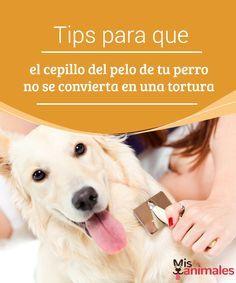 Tips para que el cepillo del pelo de tu perro no se convierta en una tortura Aquí tienes varios consejos interesantes para que el cepillo del pelo de tu perro no sea una tortura ni para ti ni para el pobre animal #Consejos #tips #pelo #perro