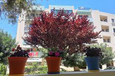 Nasze kwiatki Crete, Studio, Plants, Life, Studios, Plant, Planets
