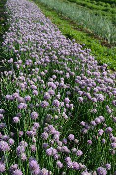 Fresh produce and flowers for the Prescott, Chino Valley and Flagstaff communities. Farm Life, Farmer, Brick, Gardens, Flowers, Plants, Outdoor Gardens, Garden, Flora