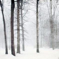 snow white forest winter