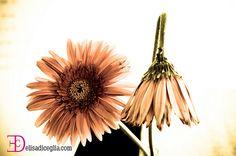 Fiore vita e morte
