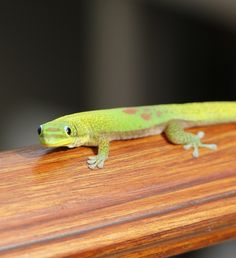Peek-a-boo! This little gecko popped by just to say hello at Four Seasons Resort Hualalai at Historic Ka'upulehu.