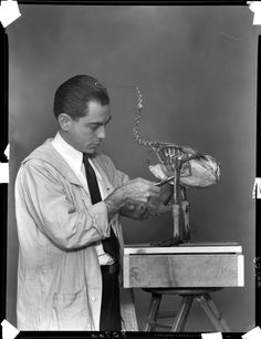 © The Field Museum, Z80766. John Moyer modeling unidentified bird specimen.5x7 negative12/13/1937