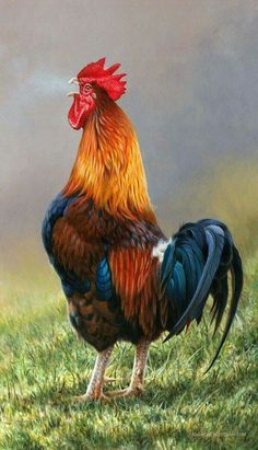 Bird Art, Coqs, Rooster Art, Rooster Painting, 2017 Rooster, Fancy Chickens, Chickens And Roosters, Pet Chickens, Raising Chickens