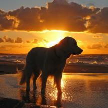 golden sunset ♥