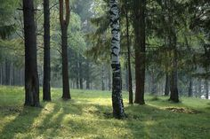 Forest Daylight - Wall Mural & Photo Wallpaper - Photowall