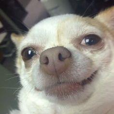 - Jon and Dany - - – Jon and Dany Animaux drôles – Jon und Dany Cute Animal Memes, Cute Funny Animals, Funny Animal Pictures, Cute Baby Animals, Cute Cats, Funny Dog Memes, Cartoon Memes, Funny Dogs, Cute Love Memes