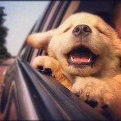 Top 10 Most adorable puppy pics :)