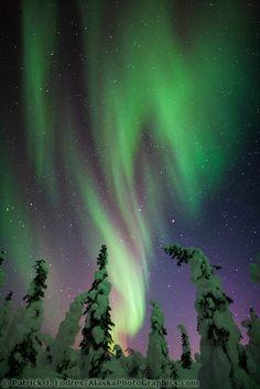Aurora borealis over snow covered spruce trees, interior Alaska. - Lookphotos - Aurora borealis over snow covered spruce trees, interior Alaska. Aurora borealis over snow covered spruce trees, interior Alaska. Aurora Borealis, Northen Lights, Spruce Tree, See The Northern Lights, Natural Phenomena, Beautiful Sky, Belle Photo, Nature Photos, Night Skies