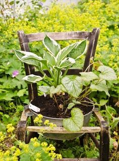 DIY  Recycled Chair garden planter - 25 DIY Low Budget Garden Ideas | DIY and Crafts