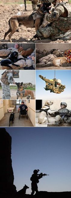 Love for military soldiers and their dogs.
