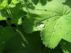 Raindrops keep falling on my leaf - 2015