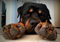 so pretty. big paws, love 'em!