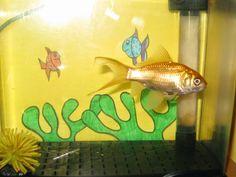 Actividades para el primer ciclo de Educación Infantil: Proyecto los peces