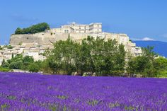 Chateau of Grignan Drôme, Provence. A Renaissance castle surrounded by fields of lavender: we are at the heart of the Drôme Provençale. A refined gentle haven, dear to the Marquise de Sevigne.