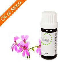 Escentia Rose Geranium (Pelargonium graveolens) Essential Oil