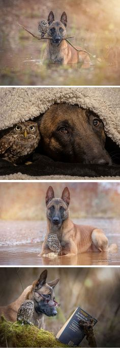 Poldi And Ingo, Unconventional Friends