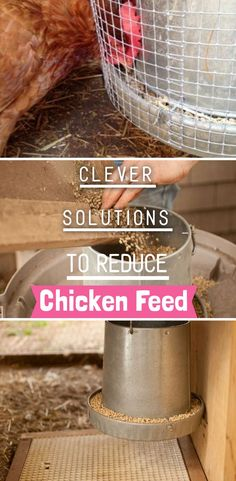 Spread the love 573 Wasted chicken feeds can cost you more than you're willing to charge as wastage. So if you're planning or are already raising chickens in your backyard, keeping … Types Of Chickens, Raising Backyard Chickens, Backyard Poultry, Keeping Chickens, Small Farm, Grow Your Own Food, Sustainable Living, Farm Life, Chicken Feeders