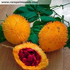 Found in India,Vietnam and China, this fruit aids dry eyes and promotes healthy vision. Funky Fruit, Weird Fruit, Strange Fruit, Colorful Fruit, Weird Food, Tropical Fruits, Fruit And Veg, Fruits And Vegetables, Fresh Fruit