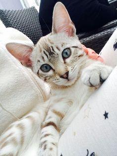 looks like my kitty