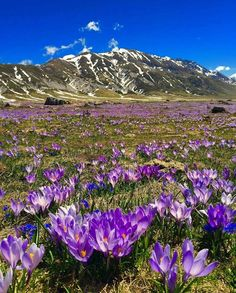 Campo Imperatore: 'The area is most popular for its winter skiing, though it's lovely to walk or drive here during the warmer months.' Abruzzo: the Bradt Guide www.bradtguides.com