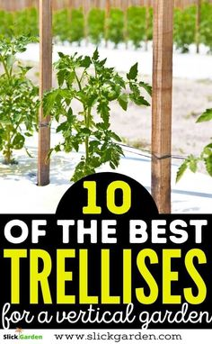 10 Best Trellis Ideas For Vertical Gardening | Slick Garden. It is not a bad idea to grow plants in your back yard or Garden and get vegetables for your kitchen. When you start growing vegetables or plants in your garden you know that unfortunately, most plants need a trellis to grow.