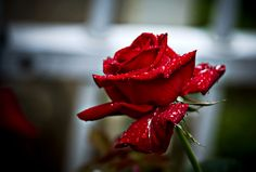 There are a lot of different ways to achieve that perfect Valentine's Day photo. Props are rather interesting to use in photography. Perhaps a bunch of red, ...