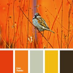 Gamma of juicy natural colors: yellow, orange and shade of Sicilian orange complemented with neutral gray and natural dark brown color. This scheme can be used to design a spacious kitchen (bright removable panels, for example) or living room.