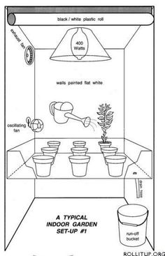 Things to Consider When Growing Indoor weed
