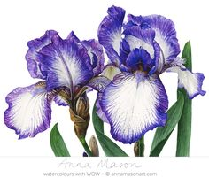 The vivid Bearded Iris only flowers for a short time- capture them while you can!